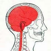 cranio1