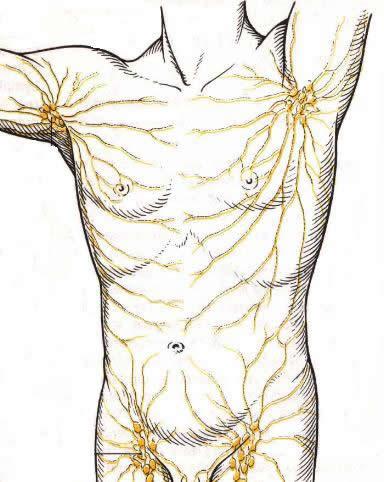 lymphbahnen